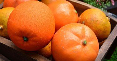 Al Het Goede van Fel Oranje Etenswaren!