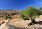 Arganboom, De Marrokaanse Levensboom