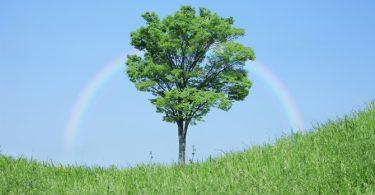 """Wat je Moet Weten Over """"Ecovriendelijke"""" Etiketten"""